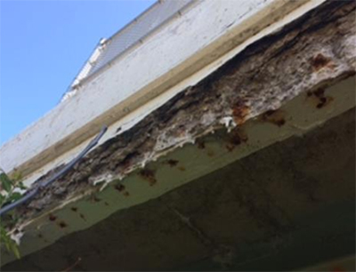 Corrosion on deteriorated parapet wall