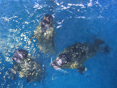 Seals at VA Aquarium & Marine Science Center