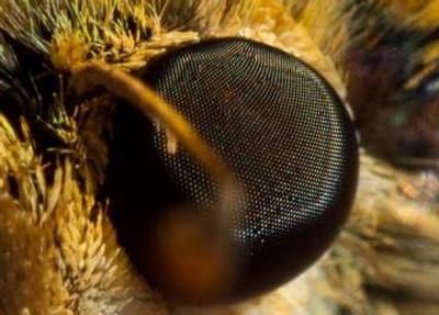 a moth's eye