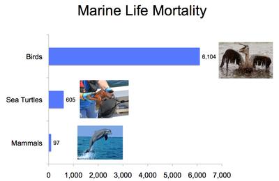 Marine Life Mortality