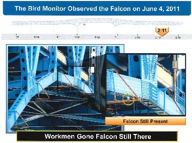 Falcon Later
