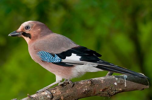 istock/ornitolog