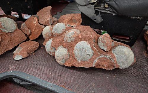Henyuan dinosaur eggs