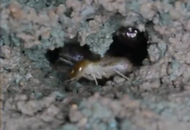 Termites Teach Tomorrow's Builders