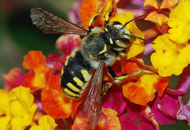 UK Builder is a Bee's Best Friend